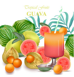 Smoothie guava and gooseberry fruits realistic vector