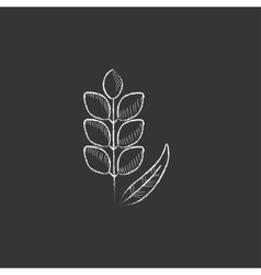 Wheat drawn in chalk icon vector