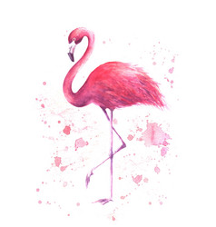 Watercolor pink flamingo vector