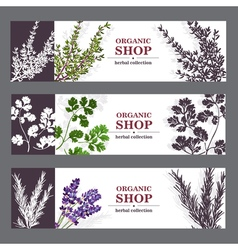 Organic shop banners with herbs vector