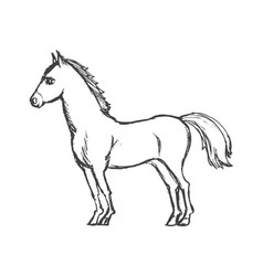 beautiful horse from side vector image