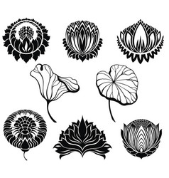 lotus collection vector image