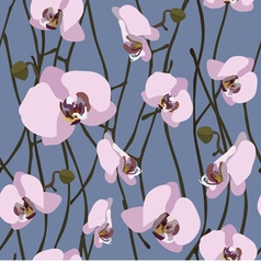 Seamless background from blossoming orchid vector image vector image