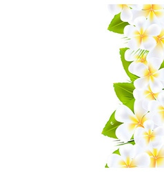 Frangipani flowers border vector