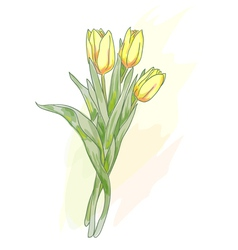 bouquet of tulips watercolor vector image vector image