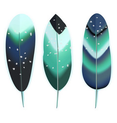 colorful bird feathers vector image vector image