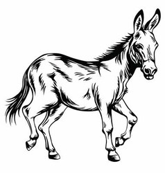 Donkey Stylized Drawing vector image vector image