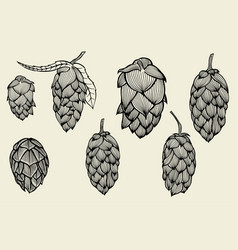 Engraving style hops set vector