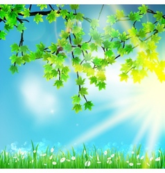 Eco nature  green and blue with sunshine vector