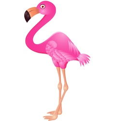 Flamingo cartoon vector