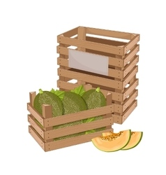 Wooden box full of melon isolated vector