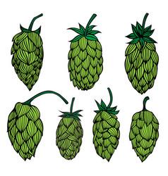 set og hop plant vector image vector image