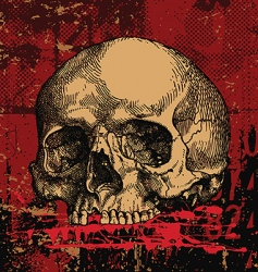 skull illustration vector image vector image