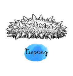 trepang ink sketch vector image vector image