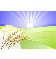 Paddy and rice vector