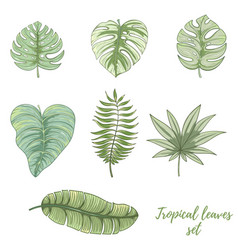 hand drawn tropical palm leaves set vector image