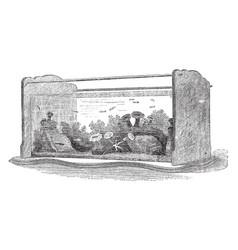 Saltwater aquarium vintage vector