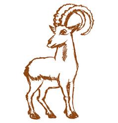 strong mountain goat vector image vector image