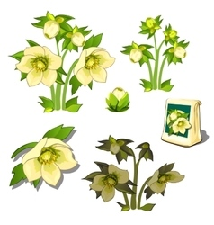 Seeds stages of growth and wilting yellow flowers vector