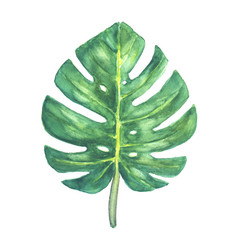 Green tropical monstera leaf vector