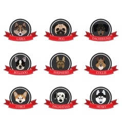 Flat icons of pedigree dogs with the names vector