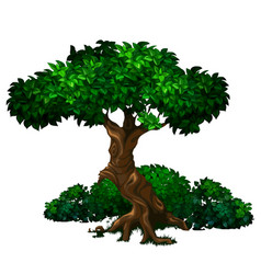 Old oak tree with lush green foliage and bushes vector
