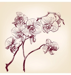 Floral orchid hand drawn vector