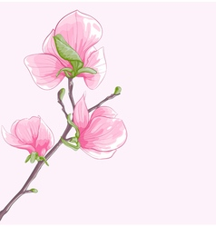 Background with twig blossoming magnolia tree vector