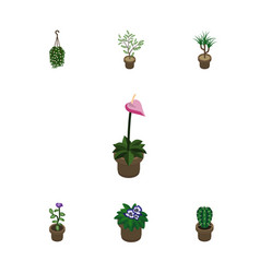 Isometric houseplant set of flowerpot fern vector