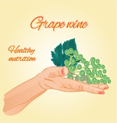 Grape wine in the palm of healthy nutrition vector