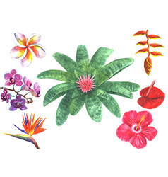 set of tropical exotic flowers vector image