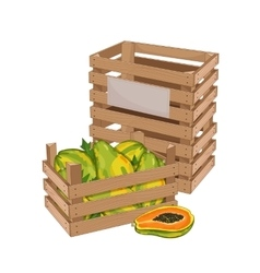 Wooden box full of papaya isolated vector