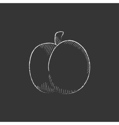 Plum with leaf drawn in chalk icon vector