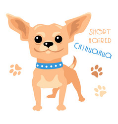 funny shorthaired chihuahua dog sitting vector image vector image