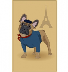 french bulldog vector image vector image