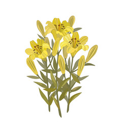 bouquet of lilies vector image vector image