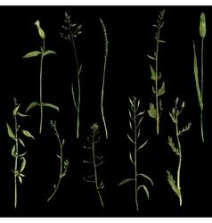 Set of watercolor drawing plants vector