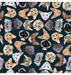 Flat dark seamless pattern pedigree cats vector