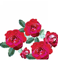 Red roses bouquet isolated on white vector