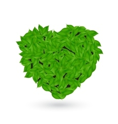 Green leaves from trees in the shape of a heart vector