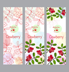 herbal tea collection cowberry banner set vector image vector image