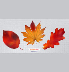set of autumn leaf isolated vector image vector image
