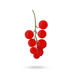 Berry red currant on a green branch on a white vector