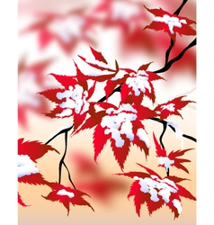 Winter landscape maple vector