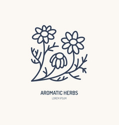 chamomile line icon aromatic herbs logo vector image