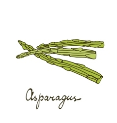 Colorful hand drawn card with asparagus vector
