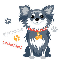 funny longhaired chihuahua dog sitting vector image