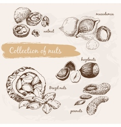Collection of nuts vector