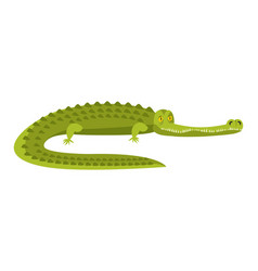crocodile isolated alligator on white background vector image