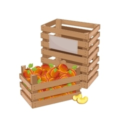 Wooden box full of peach isolated vector